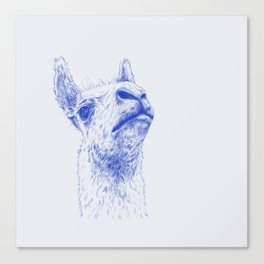 A lama that likes some drama Canvas Print