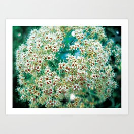 Growing in the Astro plane  Art Print