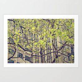 Maze Of Branches Art Print