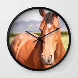 Bay Mare Wall Clock