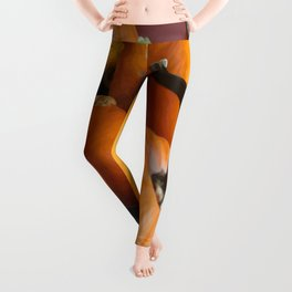 Vector Style Harvest Of Pumpkins Leggings