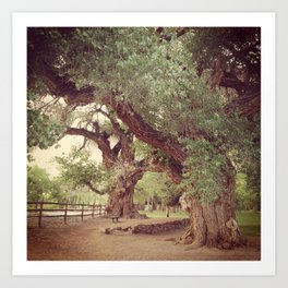 Mighty Cottonwood Trees Art Print