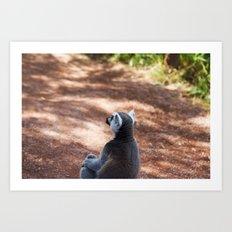 Lemur Catta III Art Print