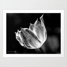 Virichic in Black and White Art Print