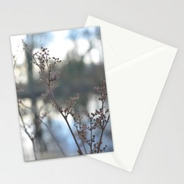 Winter Cow Parsley, Fine Art Photographic Print. Home Decor Stationery Cards