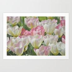 Tulpen Art Print