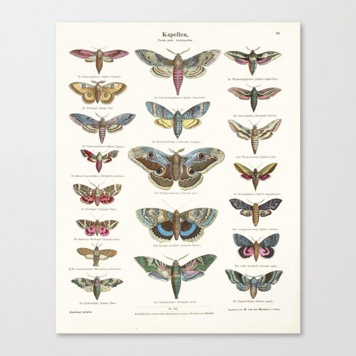 Vintage Moth Chart Leinwanddruck