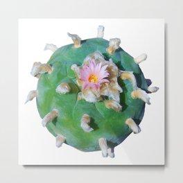 "Lophophora ""Peyote"" Williamsii Entheogen Metal Print"