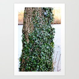 Covered in Ivy Art Print