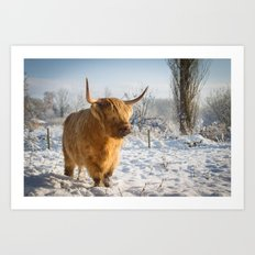 Highland Cow in the snow Art Print