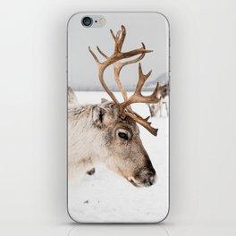 Reindeer with Antlers In Snow, Norway Tromsø Art Print   Travel Photography iPhone Skin