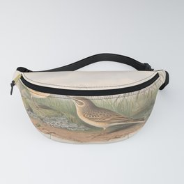 009 Tawny Pipit anthus campestris4 Fanny Pack
