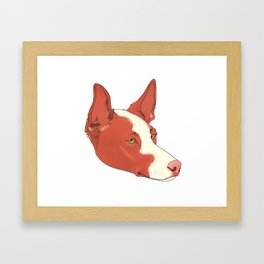 Ibizan Hound Framed Art Print