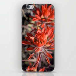 Desert Paintbrush iPhone Skin