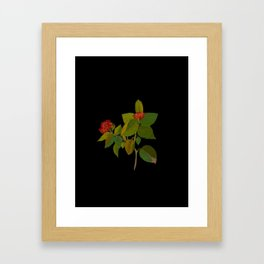 Lantana Mary Delany Vintage Floral Collage Botanical Flowers Black Background Framed Art Print