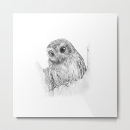 The bare-legged owl or Cuban screech owl Metal Print