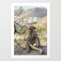 Monkey posing, Sun Temple, Jaipur India  Art Print