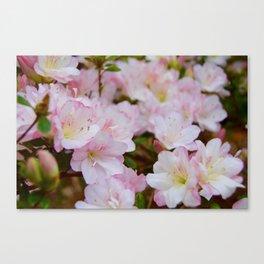 Blooming Azalea Flowers Canvas Print