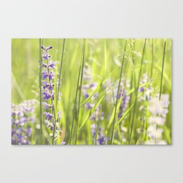 Country grass Canvas Print
