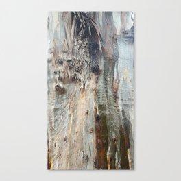 Colors of a Eucalyptus Canvas Print