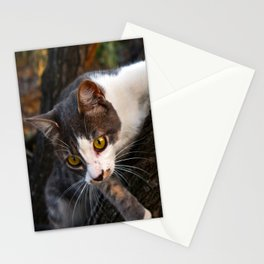 Cat on the Tree Stationery Cards