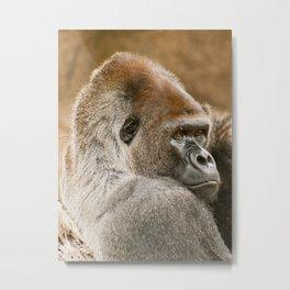Gorilla Male Metal Print