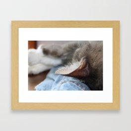 Cozy Cat Sleeping on Denim Jacket Framed Art Print