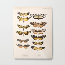 Vintage Scientific Anatomical Insect Butterfly Illustration Vintage Hand Drawn Art Metal Print