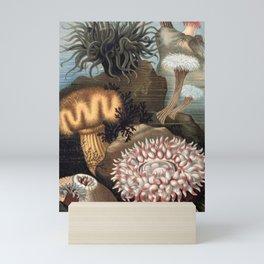 Assorted sea Anemones illustration Mini Art Print