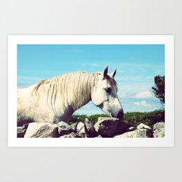 Connemara Pony Art Print