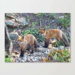 fox 2018-6 Canvas Print