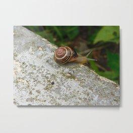 The Cutest Little Snail Metal Print