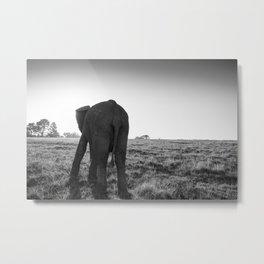 African elephant walking alone Metal Print