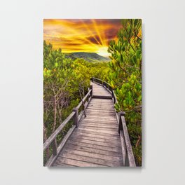Mangrove Forest Sunset Metal Print