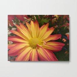 Fiery Flower Metal Print