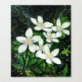 Sampaguita Canvas Print
