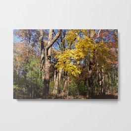 Pinnacle of Autumn Metal Print