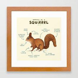 Anatomy of a Squirrel Framed Art Print