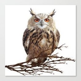 WILDERNESS BROWN OWL IN WHITE Canvas Print