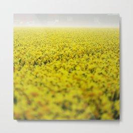 Narcissus field Metal Print