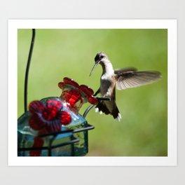 Ruby Throat Humming Bird 3 Art Print
