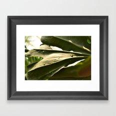 Sun Lit Green Life Framed Art Print