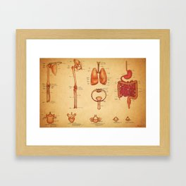 Anatomy Lesson Framed Art Print