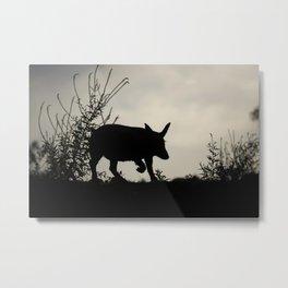 Wild Iberian Pig Metal Print