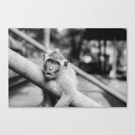 Cute Monkey (Black and White) Canvas Print
