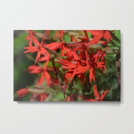 A Bunch of Fire Pinks in the Smoky Mountains Metal Print