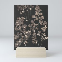 Black Maidenhair Mini Art Print