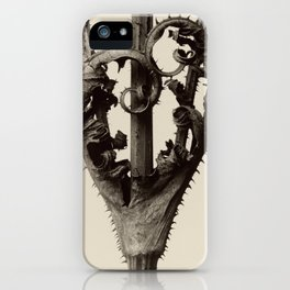 Karl Blossfeldt - Dipsacus laciniatus iPhone Case