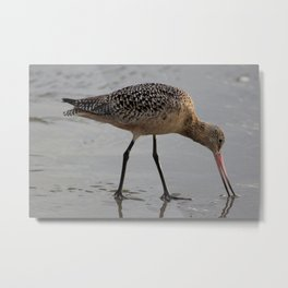 Trusting Bird Metal Print