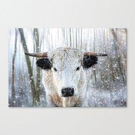 WhitePark Cow Canvas Print